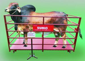Sumo Animal Scale 500kg